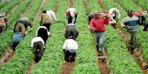 Trabajadores inmigrantes. La riesgosa jugada para sacarlos de las sombras