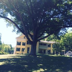 Al fondo, la casa de Emily Dickinson; en primer plano, el roble blanco, cuya sombra le inspiró algunos poemas.